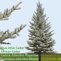 Blue Atlas Cedar Tree Texture -------------- High Resolution