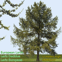 European Larch Tree Texture --------------- High Resolution
