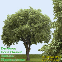 Horse chestnut 16m - High Resolution