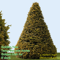 Common Yew Trimmed ---------------------- High Resolution