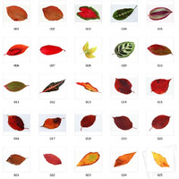 100 Leaf Textures