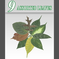 9 Assorted_Leaves