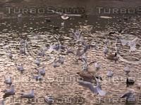 lake birds.JPG