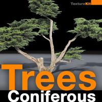 Trees Coniferous Collection