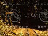 Roaring Camp Railroads - Big Trees Scene