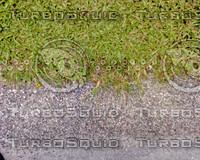 Grass03.JPG