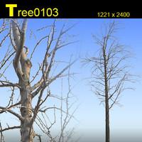 Tree0103.zip