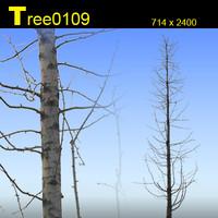 Tree0109.zip