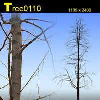 Tree0110.zip