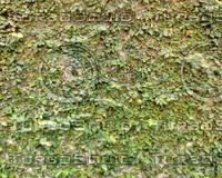 WallLeaf03.JPG