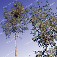 c3d_outback_tree_005.png