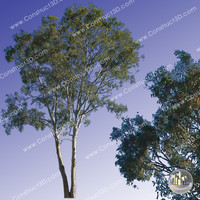 c3d_outback_tree_010.png