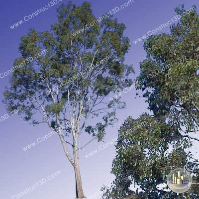 c3d_outback_tree_012_img.png