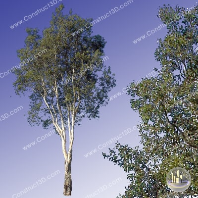 c3d_outback_tree_017_img.png