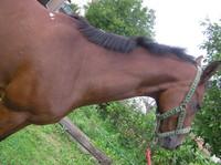 horse-photo-textrures