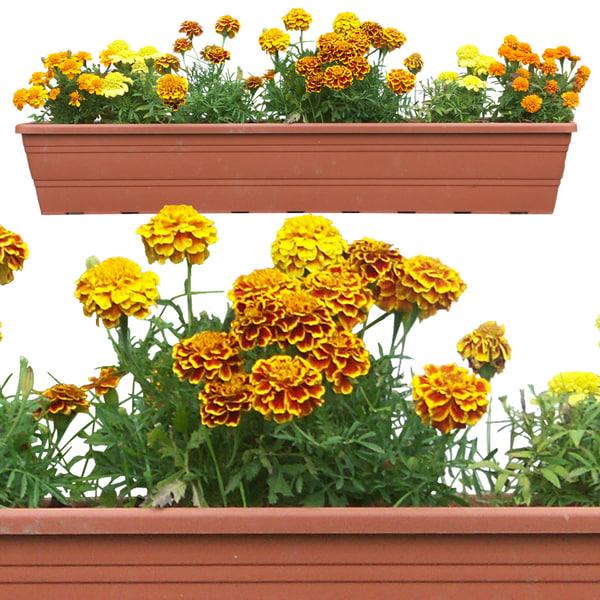 flowers10p.jpg
