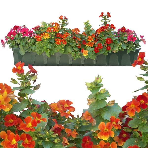 flowers9p.jpg
