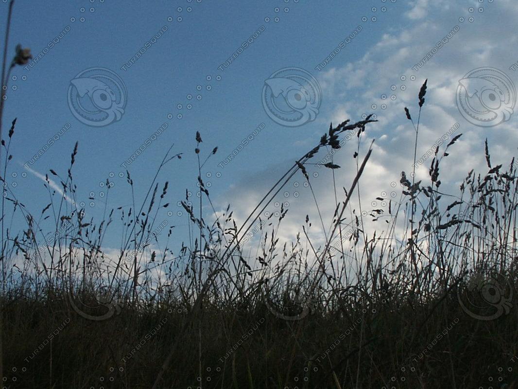 grasssill.JPG