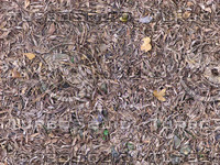ground cover1_tiled.jpg