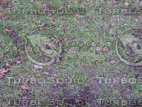 ground_cover3.JPG
