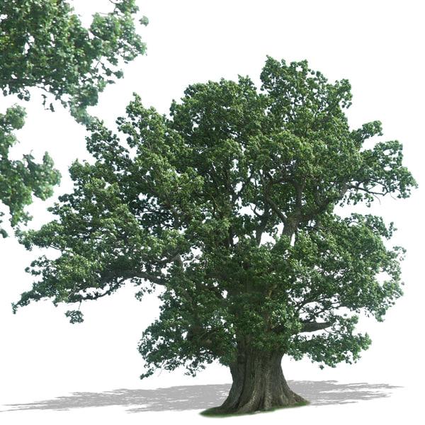 tree37p.jpg