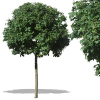 tree39