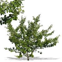 tree40