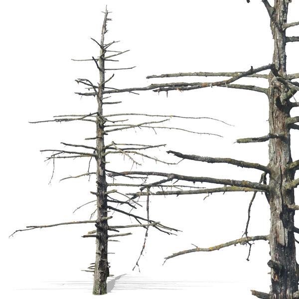 tree41p.jpg