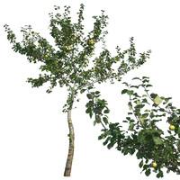 tree44