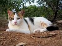 Cat in red soil
