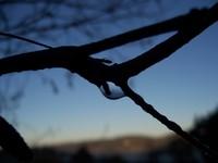 frost dawn
