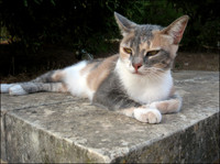 Speckled cat resting on stone bench