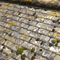 Mossy Slate Roof  High Resolution