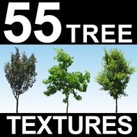55 Tree Textures