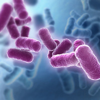 Bacteria Scene