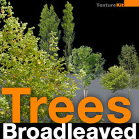 Trees Broadleaved Collection