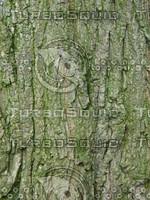 Bark (3).jpg