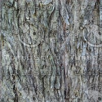 Cottonwood Bark.jpg