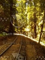 Roaring Camp Railroads - Scene