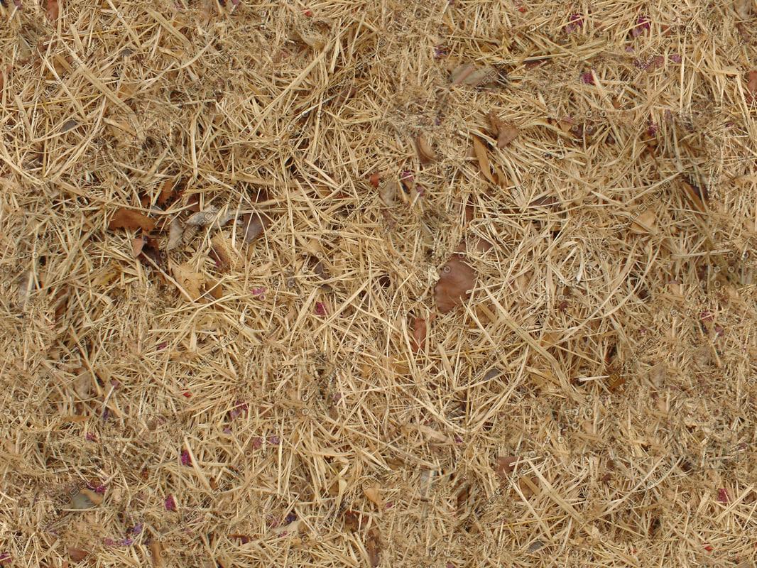 DSC03800_Dead_Grass_Earth_Tileable.jpg