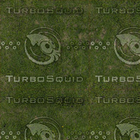 Grass Texture (Seamless)