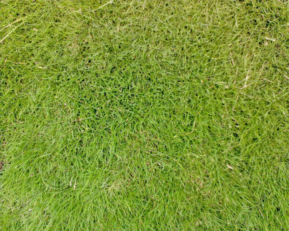 Grass04.JPG