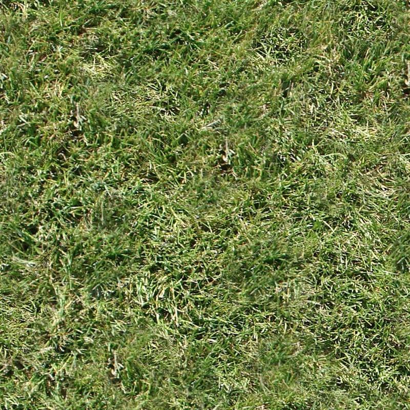 Grass_01.jpg