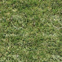 Grass_01.jpg