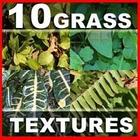 10 Grass Text