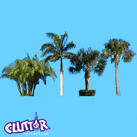 MAP - Palm Trees set 1