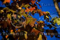 October Colors 2