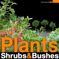 Plants Shrubs and Bushes Collection