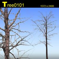 Tree0101.zip