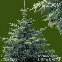 749x745 tree014.rar